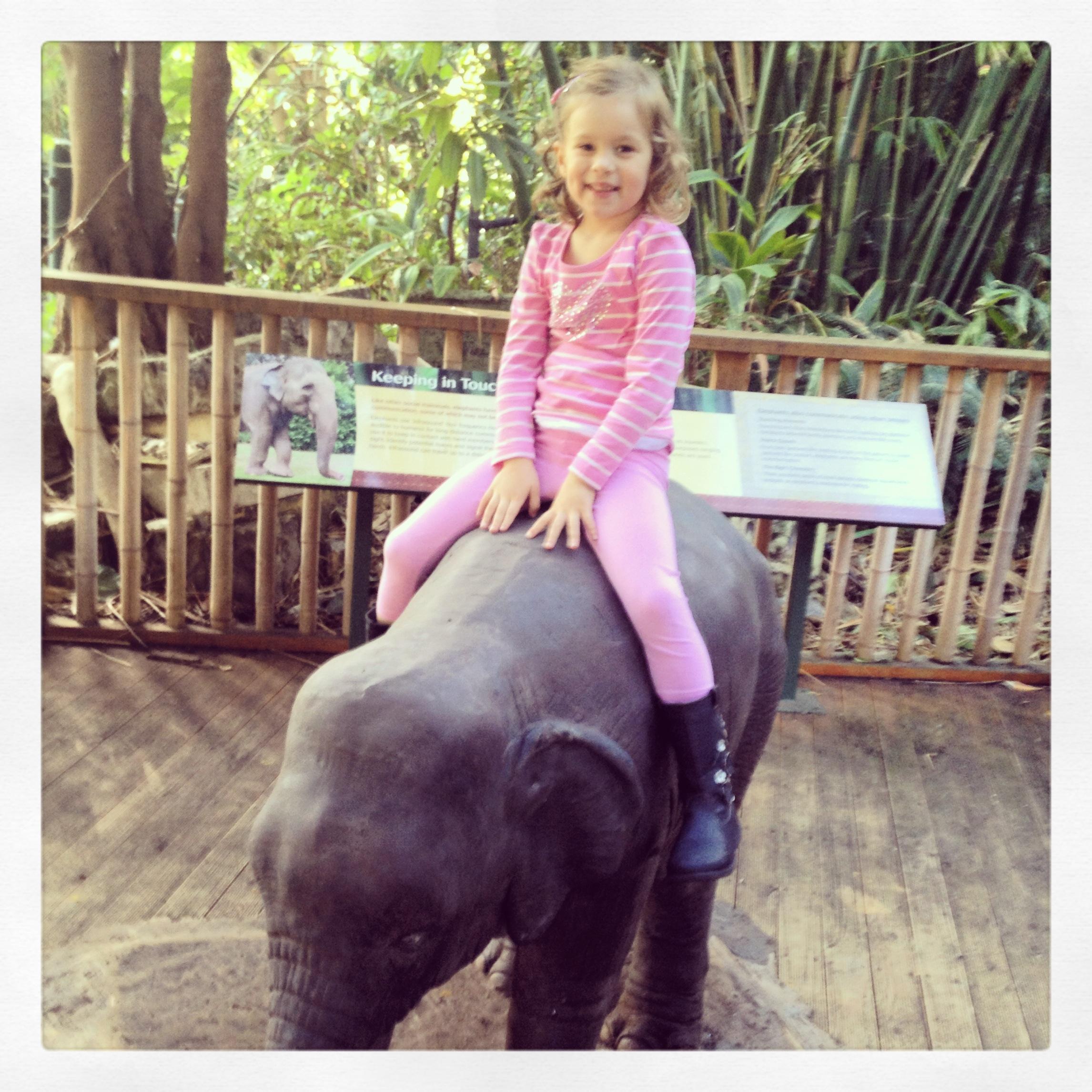 Perth Zoo Orangutan Boardwalk