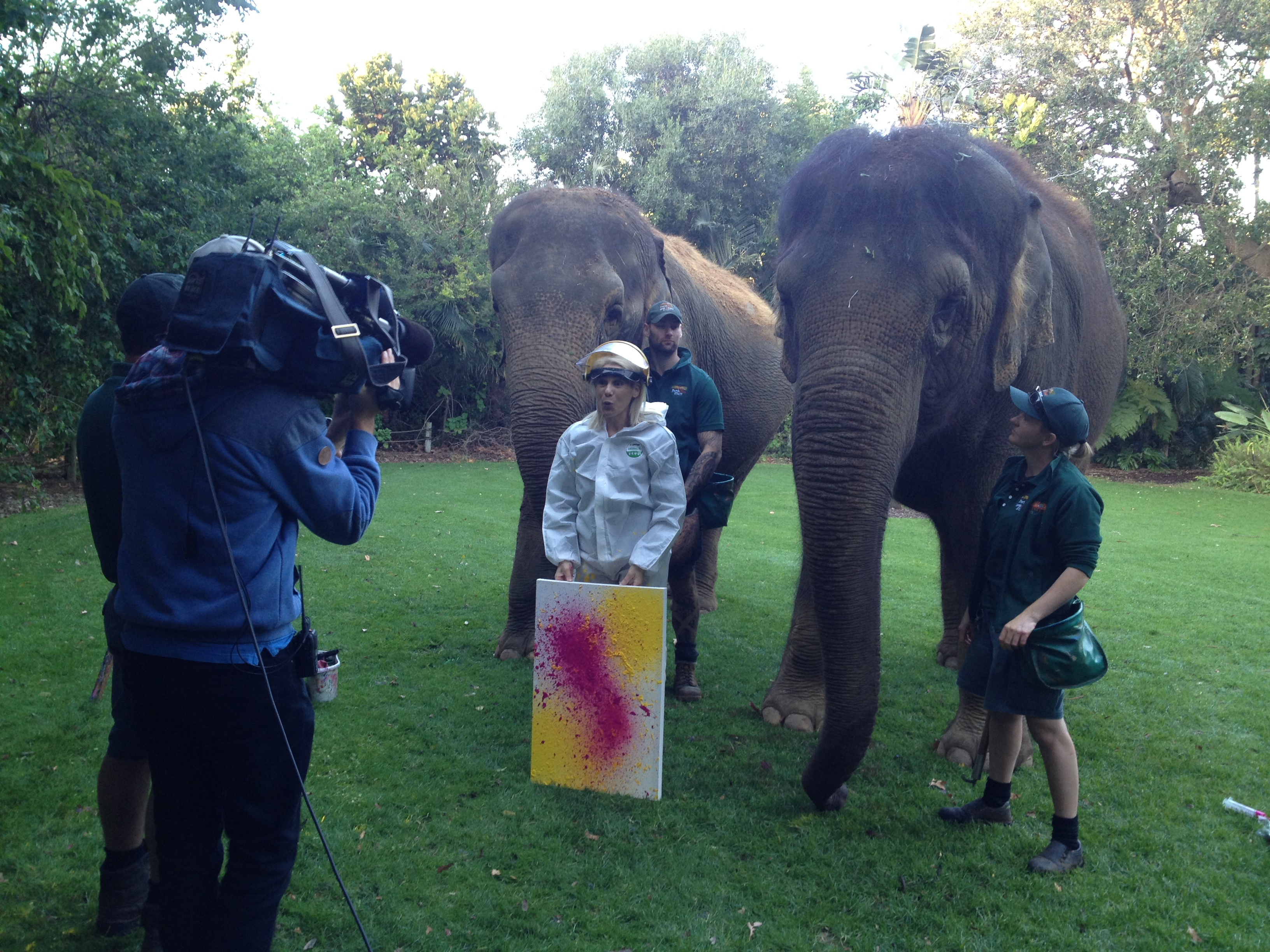 "Doing ""Ele-Art"" at Perth Zoo with resident elephants Tricia and Permai on Today Perth News for Channel 9"